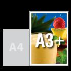 Plakat promocyjny A3+, kolor (70 gr/szt.)